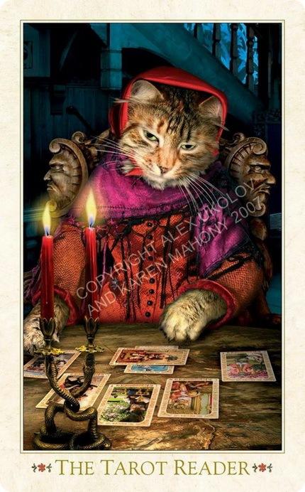 Кошачьи карты Таро - ZooPicture.ru