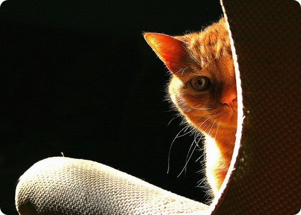 Чем пахнет моча кошки - Топ Фото Приколы