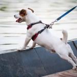 Geschirr Oder Halsband Fur Den Hund Zooplus Hundemagazin
