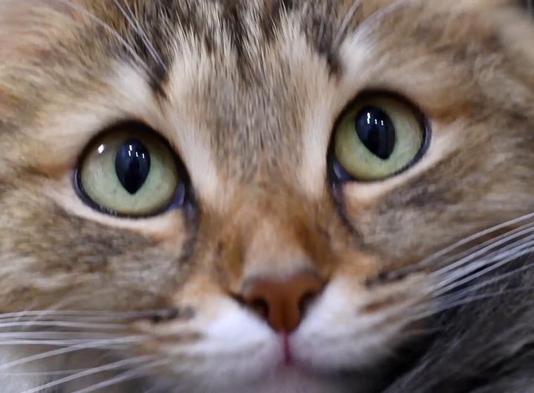 Katzensprache Was Will Mir Meine Katze Sagen Zooroyal