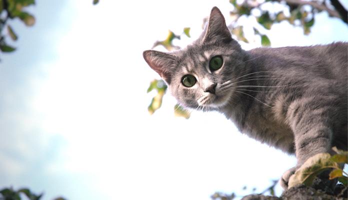Kastration Bei Katzen Vor Und Nachteile Zooroyal Magazin