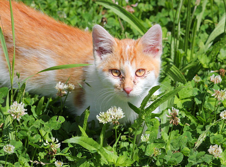 Katzenschnupfen Erkennen Und Behandeln Zooroyal Magazin
