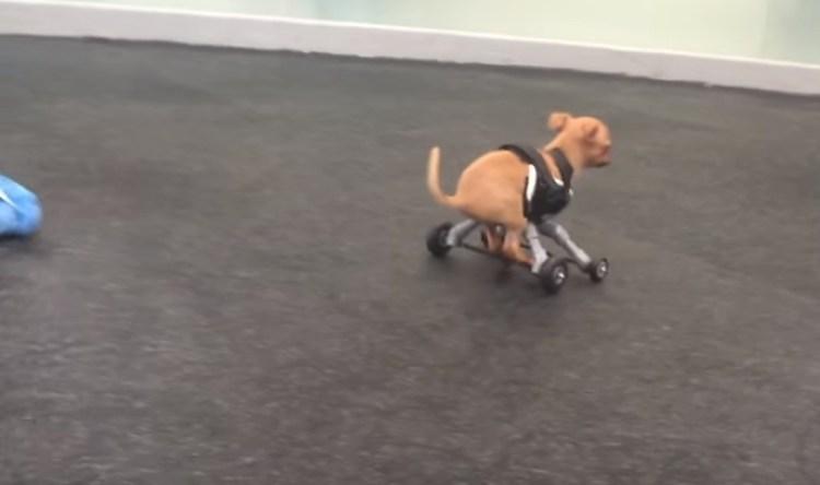 perro-abandonado-en-caja-camina-por-primera-vez7