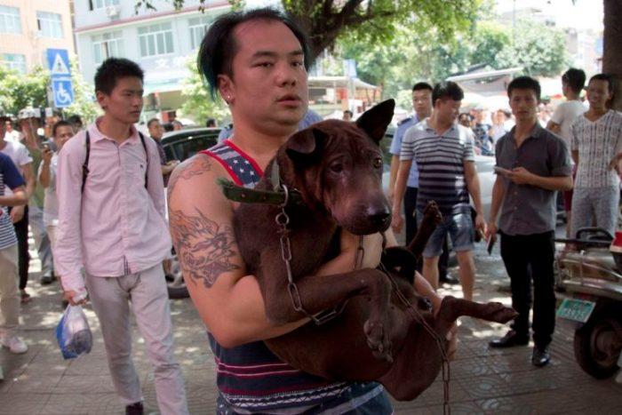Rescate-perros-festival-china cuando iban a ser convertidos en carne de perro