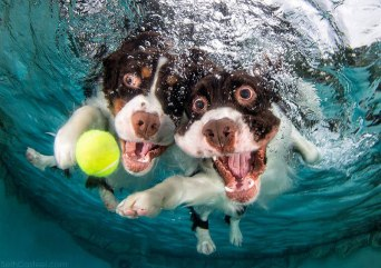 underwater-photos-of-dogs-fetching-their-balls-by-seth-casteel-8