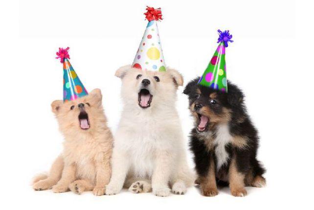 Doggie Birthday Wishes