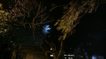 A Lua entre as árvores