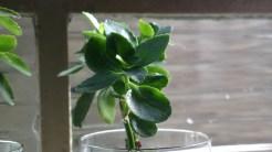 plantinhas em modo PureView com zoom digital