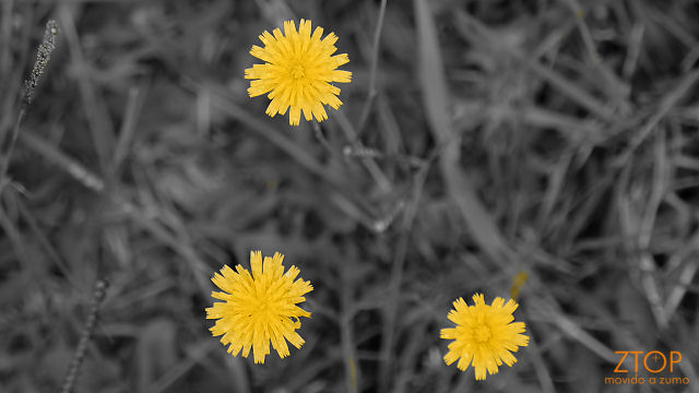 Fuji_xt1_filtro_Selec_Yellow2