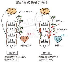 神経干渉を取り除けば、脳が体を治し始める! -安全ピンサイクル-