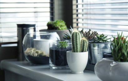 window blinds and cactus plants
