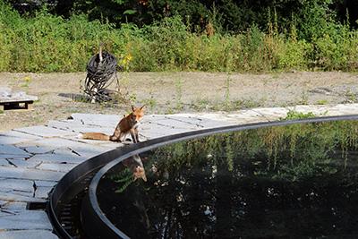 Verwaiste Baustelle, auf der sich die Füchse sonnen, 1.9.2011, Foto: Matthias Reichelt