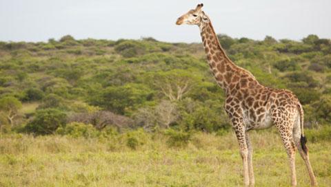 Ubizane wildlife reserve revamp