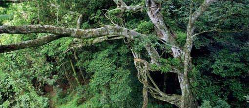 Ancient Forests of KwaZulu-Natal