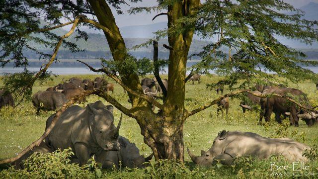 Save the Northern White rhino