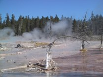 139-3939_Lodgepole_Pines_Fountain_Paint_Pot_Yellowstone_NP_W