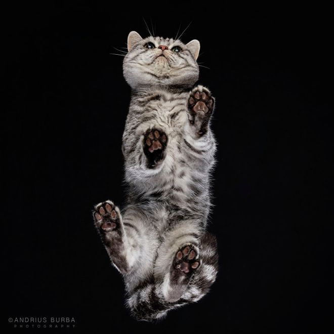 25-photos-of-cats-taken-from-underneath-5__880