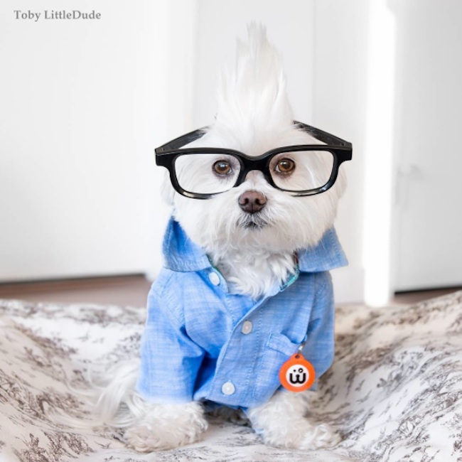 Meet_Toby_LittleDude_The_Charming_Hipster_Dog_Of_Instagram_with_Attitude_2016_03