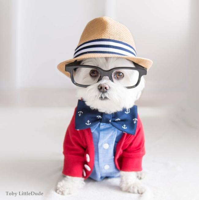 Meet_Toby_LittleDude_The_Charming_Hipster_Dog_Of_Instagram_with_Attitude_2016_04