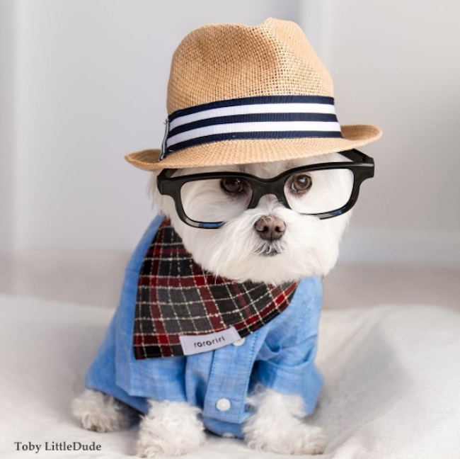 Meet_Toby_LittleDude_The_Charming_Hipster_Dog_Of_Instagram_with_Attitude_2016_07