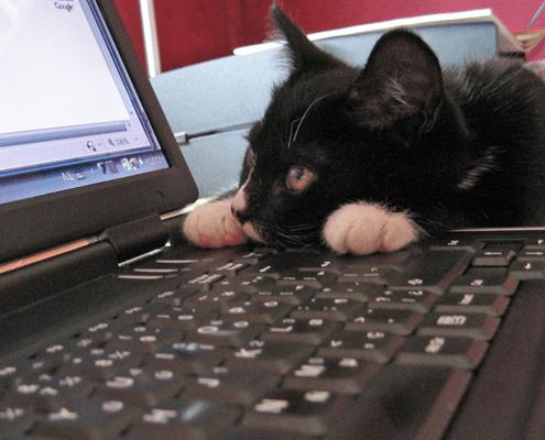 actueel kat op computer