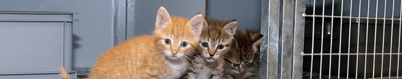 Doelstelling - header kittens in zwerfkattenopvang