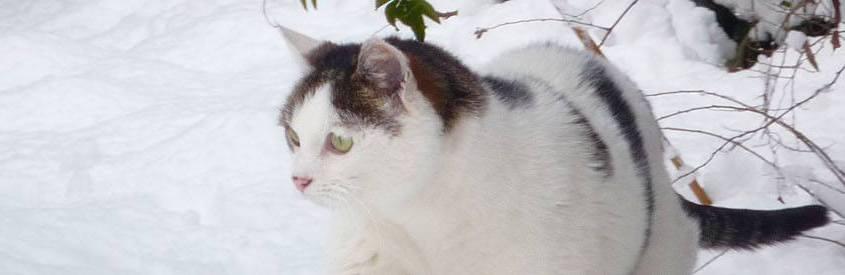 Laat zwerfkatten niet in de kou staan
