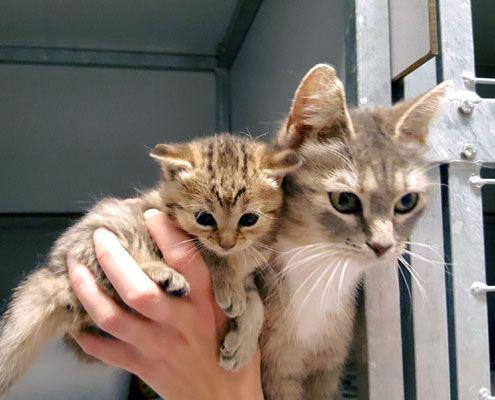 Adoptiekat Zinzi en Zazou