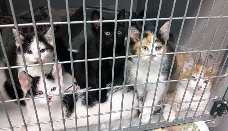 Nieuws kittens zoeken thuis
