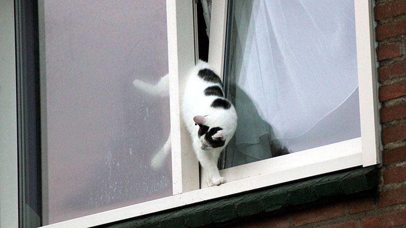 Kantelramen gevaarlijk voor katten