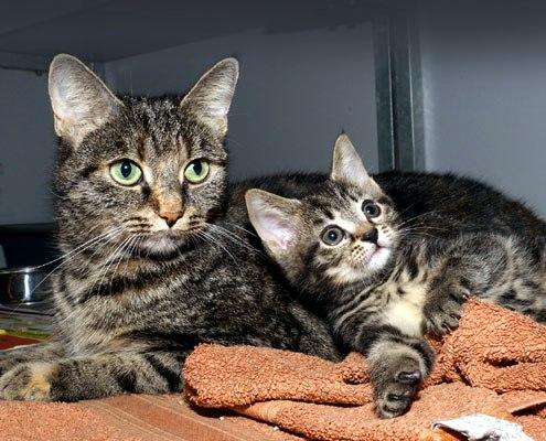 Adoptiekat Kiki en Steffi