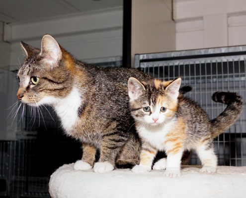 Adoptiekat Ilse en Anouk