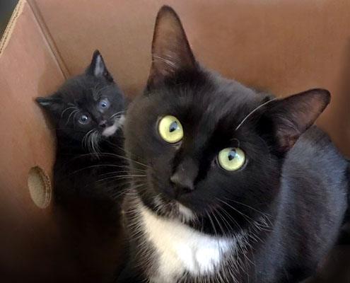 Adoptiekat Mia en Kittie