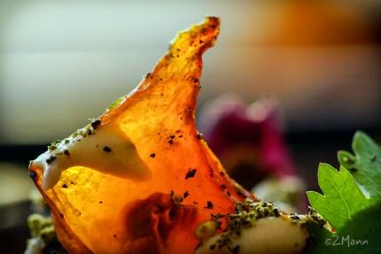 z widokiem na stół | pieczona dynia piżmowa z czerwoną cebulą i sosem tahini