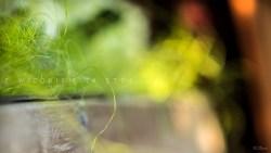 z widokiem na stół   |   wiosenne tapety