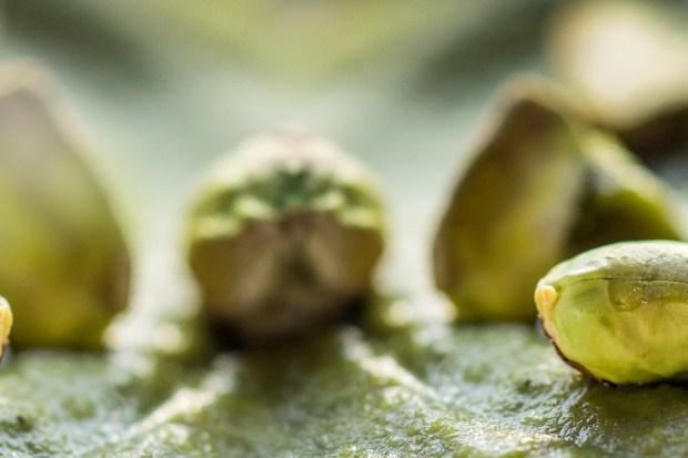 z widokiem na stół | pistacje . pistacje