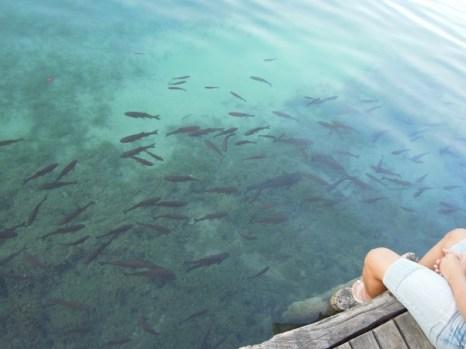Plitwickie Jeziora rybki Chorwacja