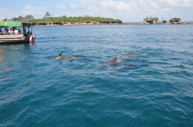 Kenia delfiny