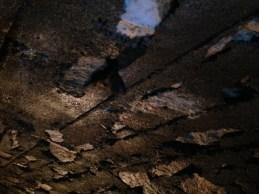 Nietoperz Jaskinia Niedźwiedzia