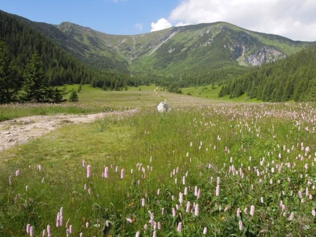 Dolina Kondratowa Tatry