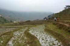 Sapa droga przez pola ryżowe Wietnam
