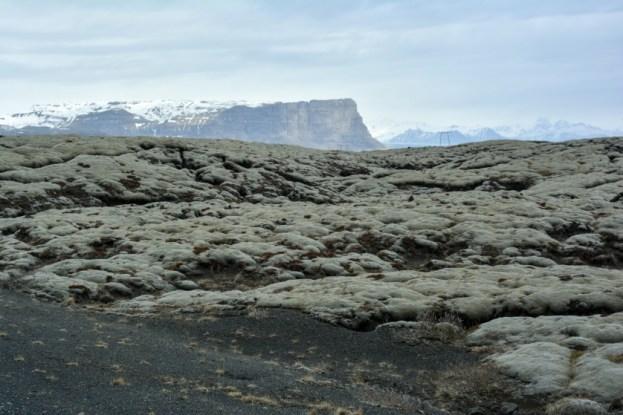 Pola lawy porośnięte mchem Islandia