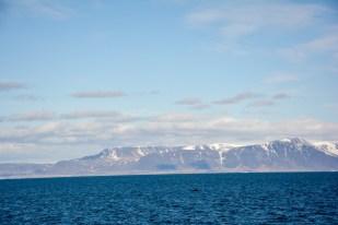 Wieloryb na tle gór Islandia