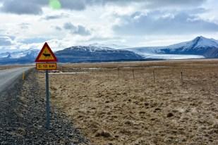 Znak uwaga renifery z widokiem na lodowiec Islandia