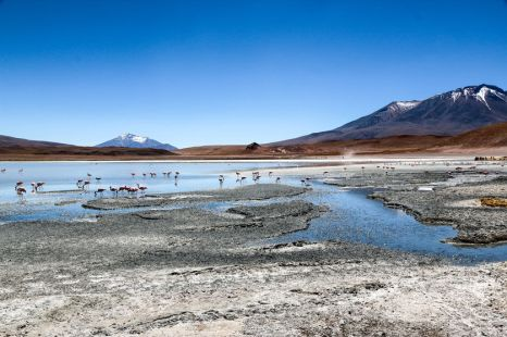 Laguna z flamingami wycieczka Salar de Uyuni Boliwia