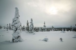 Krajobrazy Park Narodowy Urho Kekkonena Finlandia