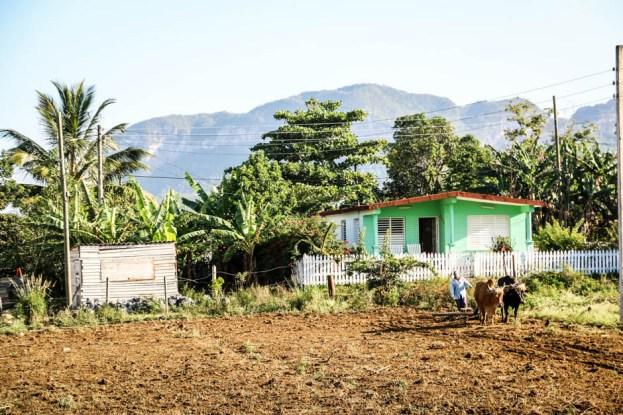 Rolnictwo Dolina Vinales Kuba