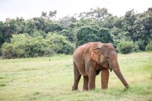 Park Narodowy Kaudulla