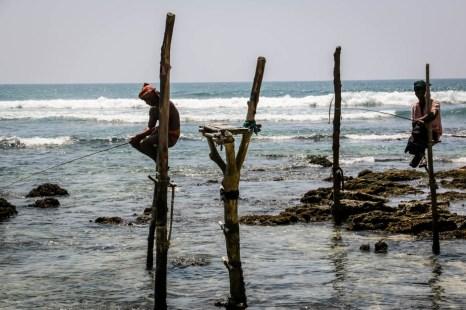 Rybacy na palach Sri Lanka 2