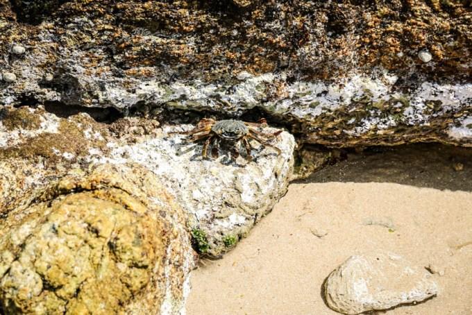 Sri Lanka kraby